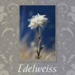На фото Edelweiss
